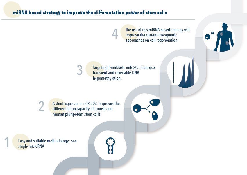Graphical abstract miRNA-based differentiation strategy